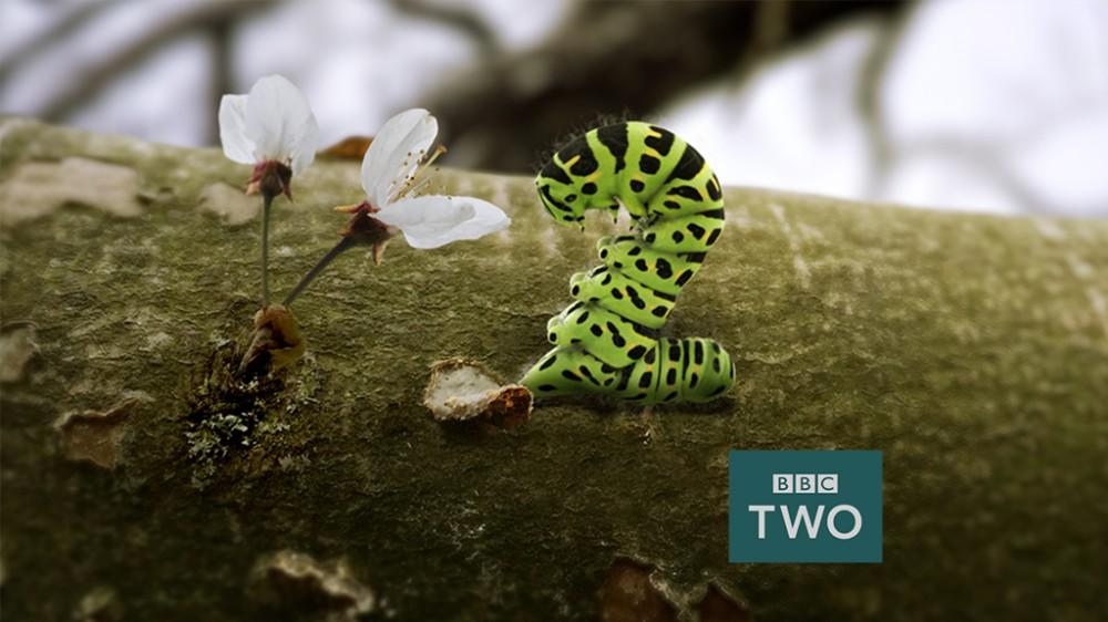BBC2_Caterpiller